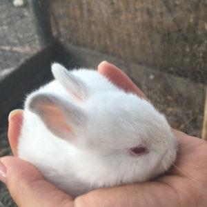 Coniglietto Padru